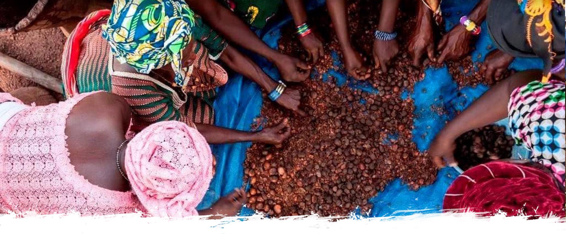 Femmes qui trient des noix de karité